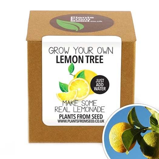 Housewarming Gifts - Lemon Tree In a Box
